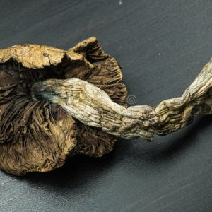 legal psychedelics for sale usa